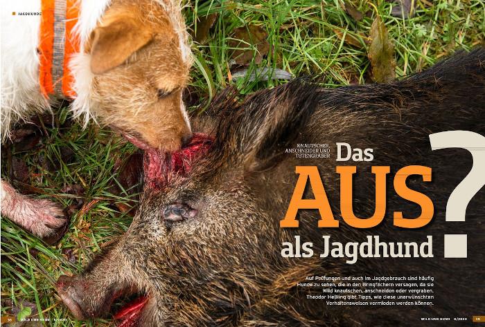 Beitrag in der Wild und Hund über Jagdhunde