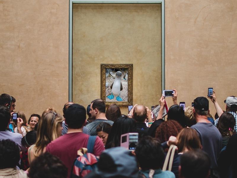 Fotomontage: Blaufußtölpelfoto im Louvre