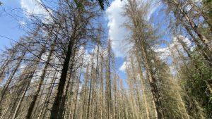 Bäume im Harz