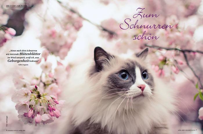 Sehr fellige Katze sitzt vor Blütenhintergrund.