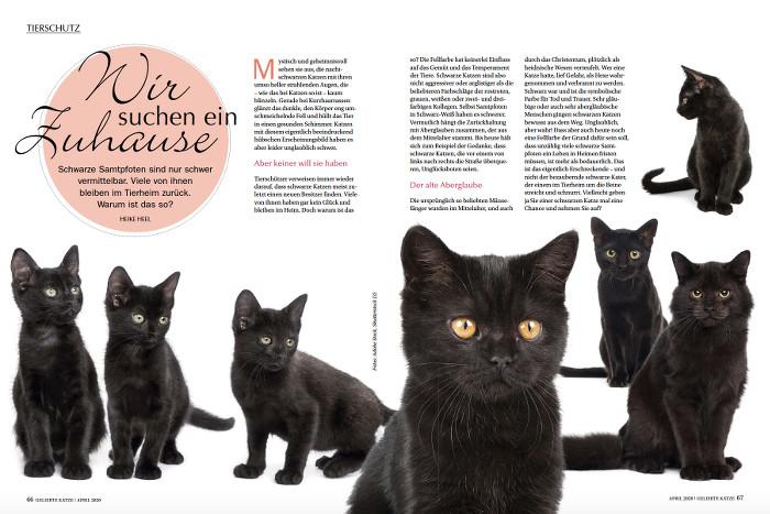 Mehrere schwarze Katzen sitzen nebeneinander.