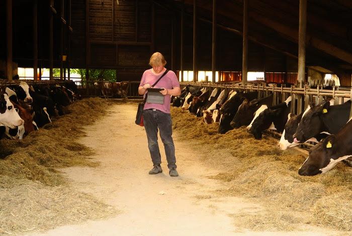 Ein Mann steht mit iPad in einem Stall, links und rechts stehen Kühe aufgereiht.