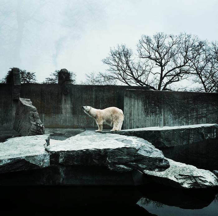 Stuttgarter Eisbär
