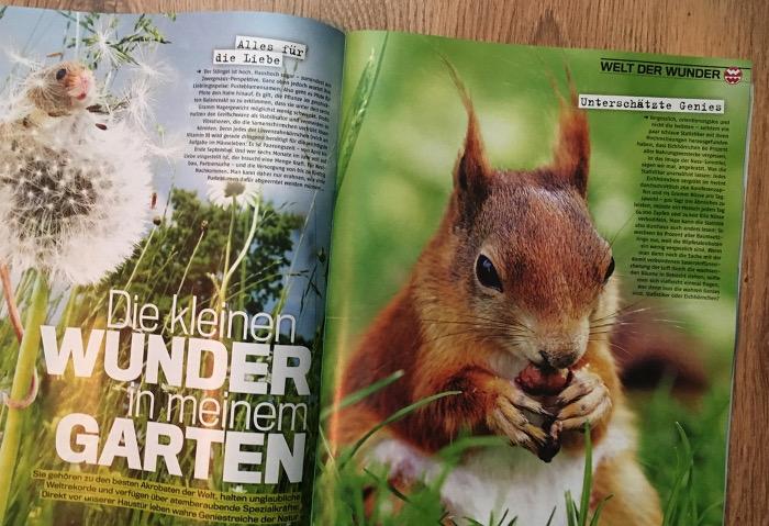 """Eichhörnchen in der """"TV14"""""""