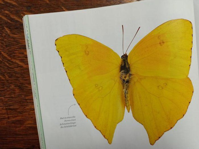 Ein Schmetterling als Symbol für die Schilddrüse in Women's Health, Ausgabe 03-2020